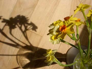 Daffodills on refinished floor