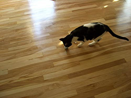 Seven inspecting the newly refinished hardwood floor