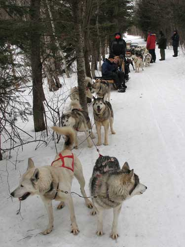 icerabbit dog sledding